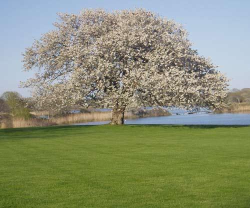 Tree Long East Hampton