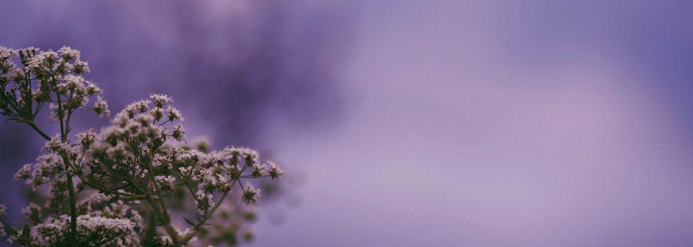 Visual ArtUltraviolet ReverieCanadian photographer Cheryl Cashin lends autumn a new fluorescence. more